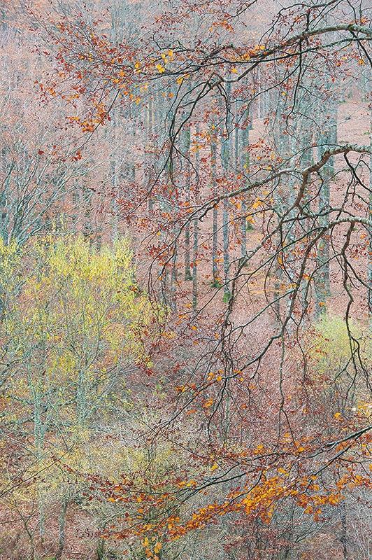 Bosque otoñal, fotografía artística de naturaleza
