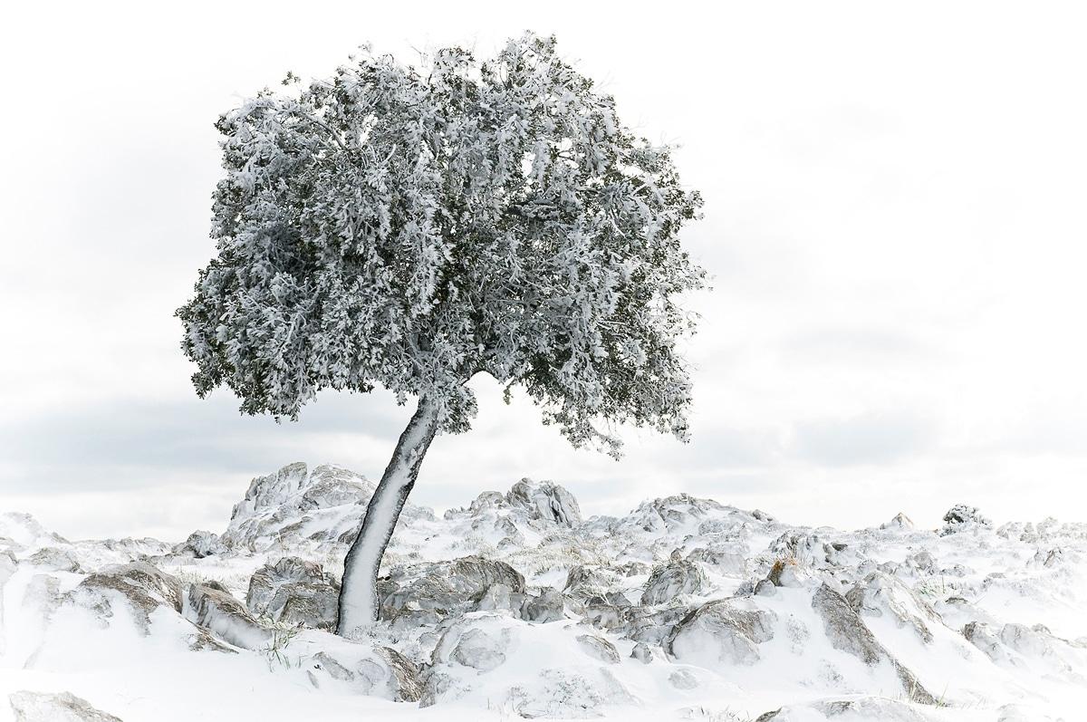 Paisaje mallorquín bajo la nieve.