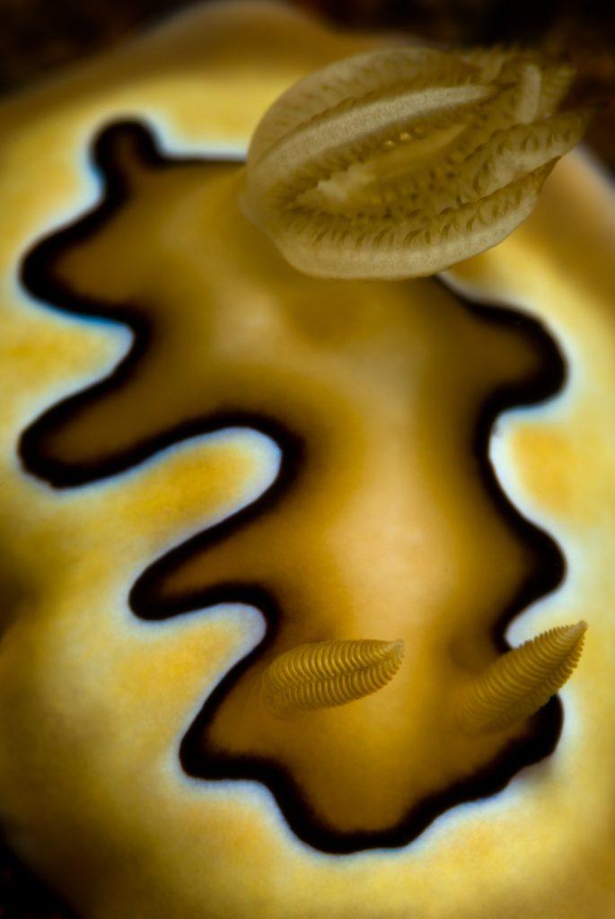seres profundidades marinas.